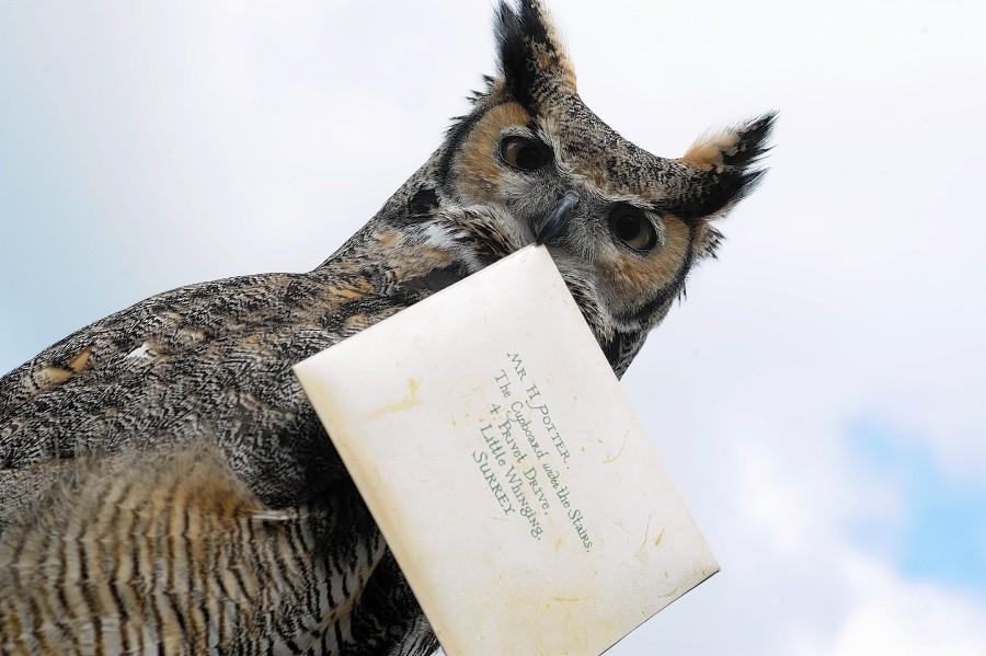 Potter-owl-1