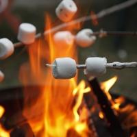 Progenitori, antenati, marshmallow ed altre idee confuse
