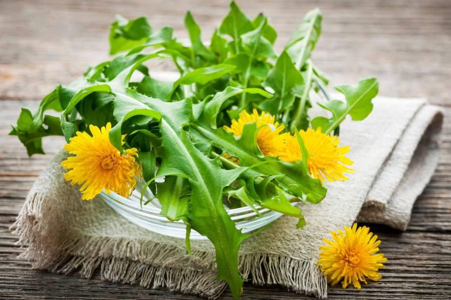 tarassaco-fiori-cover
